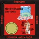 Мочеполовая система - аудио CD к машине для зарядки воды в ванной и для зарядки бейджиков
