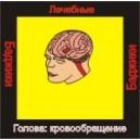 Голова: кровообращение - бейджик