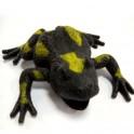 Черная жаба богатства