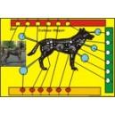 Ифрит Собака - Человек Усовершенствованный - мандала