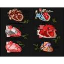 Протекторы сердца - видеозаклинание