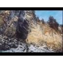 Стихия Земля - видеозаклинание